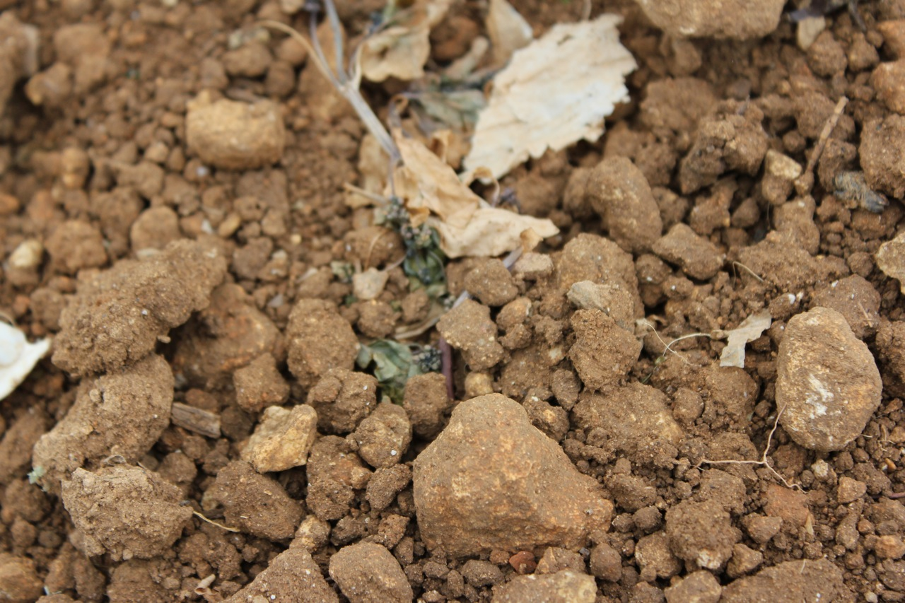 Soil from Charente, Cognac vineyard