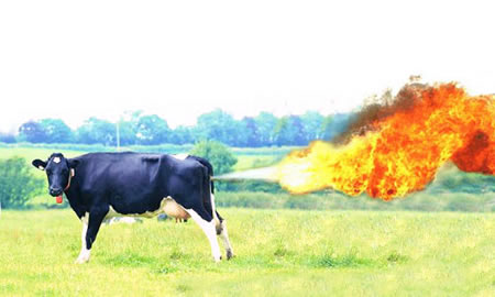 Farting Cow like Cognac