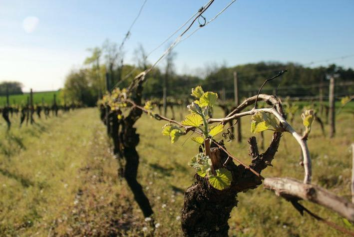 Dry Weather Conditions in Charente