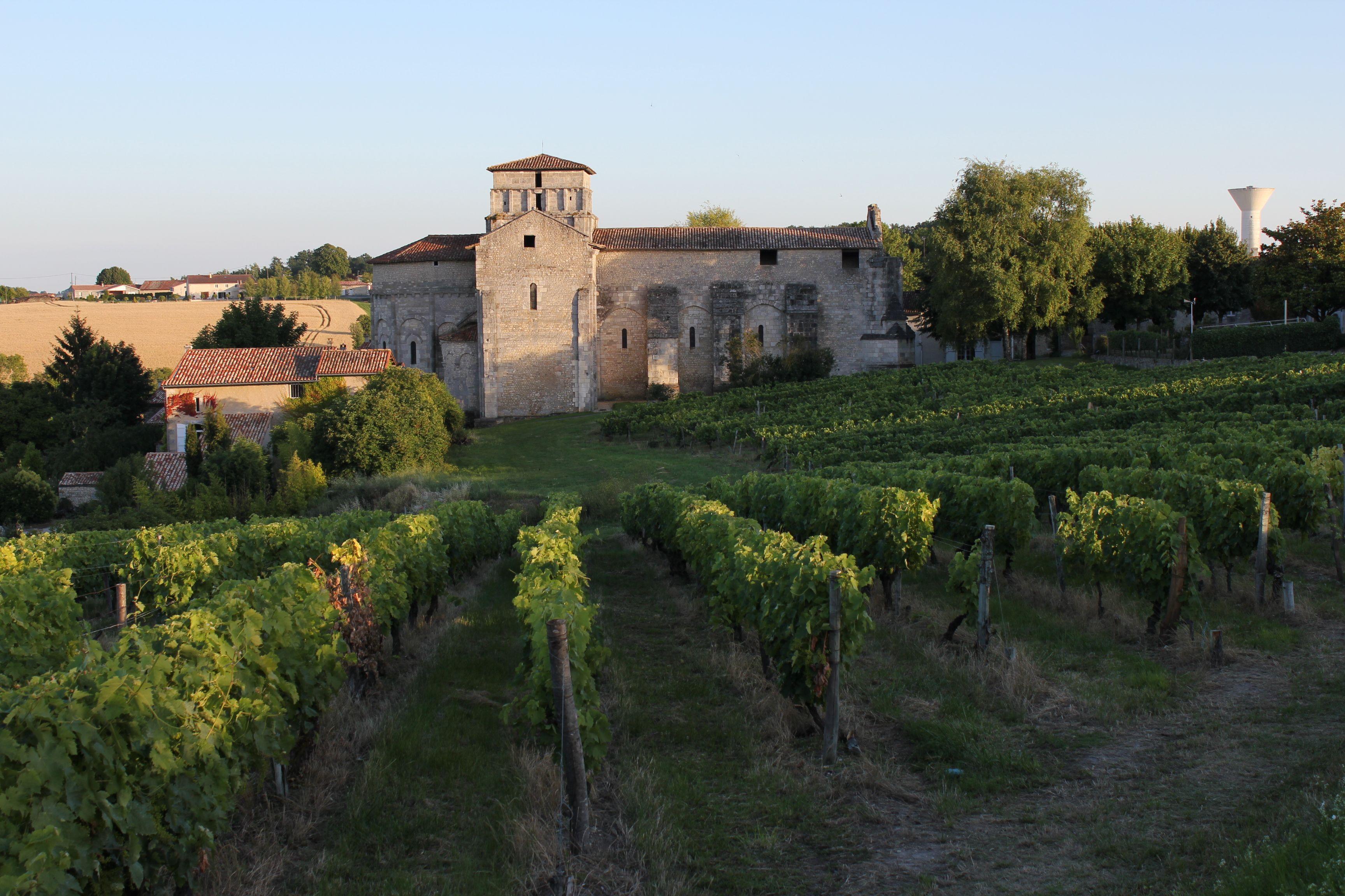 Vineyard Andre Petit Cognac