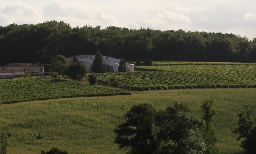Louis Royer Cognac Purchases 34 Hectares of Premier Cru Vines