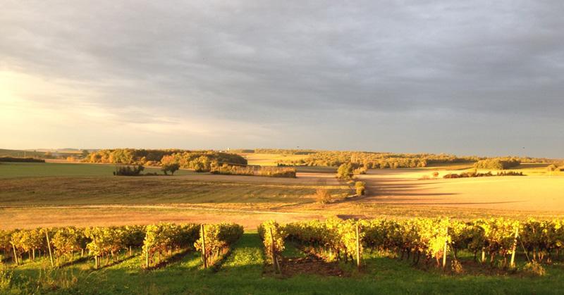 Pasquet Cognac region vineyards