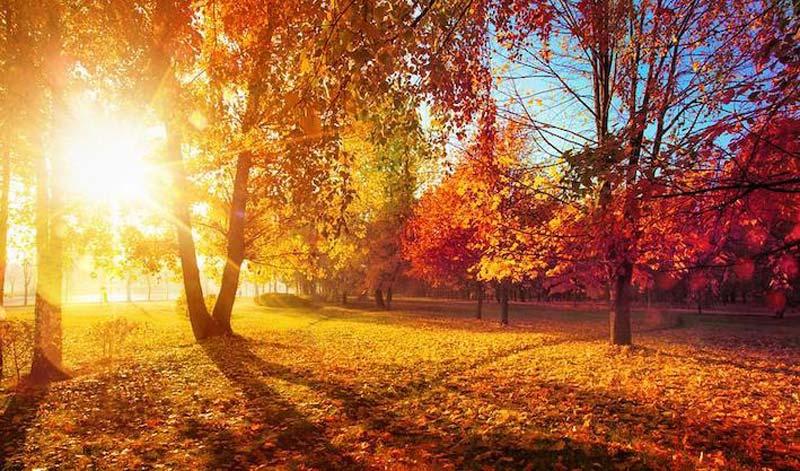 Fall in the Cognac region