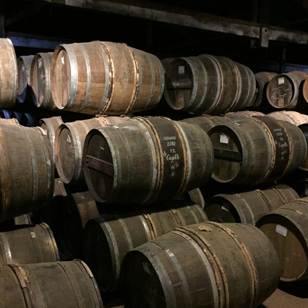 diverse barrels in cellar