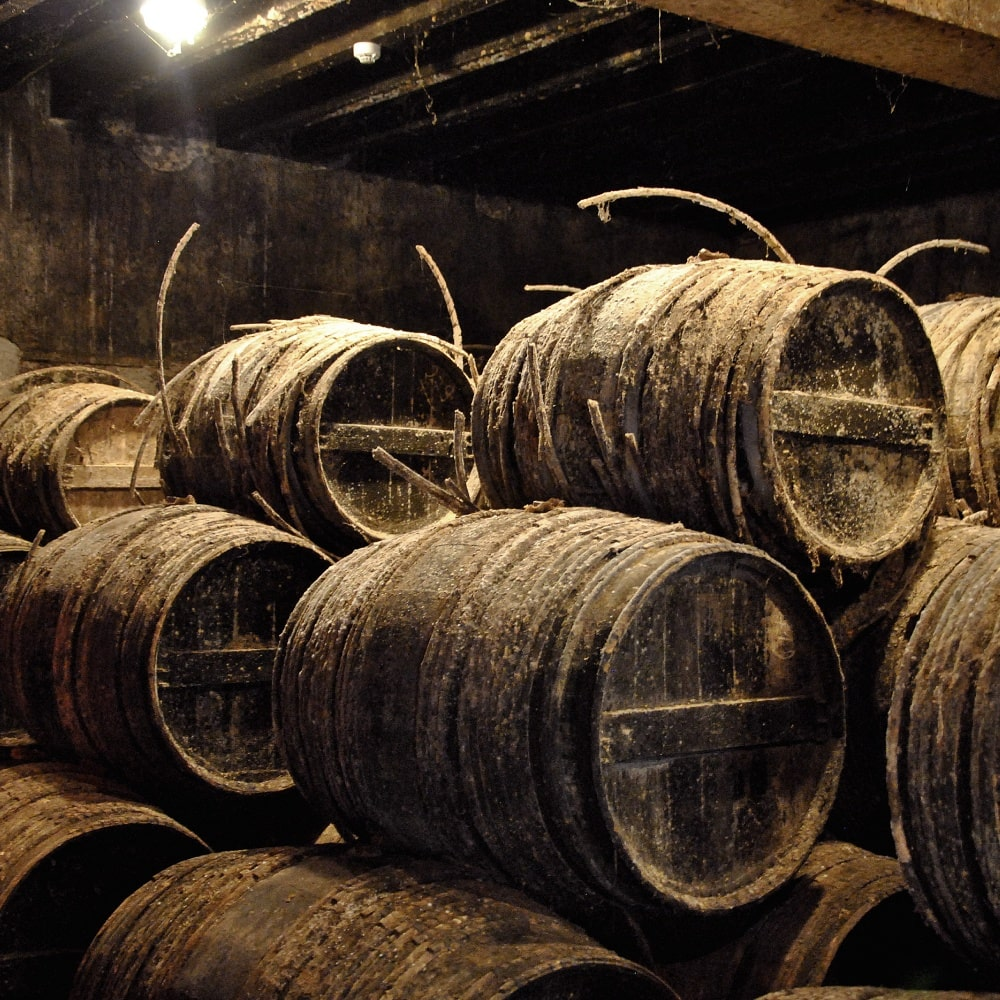 old humid cellar with barrels
