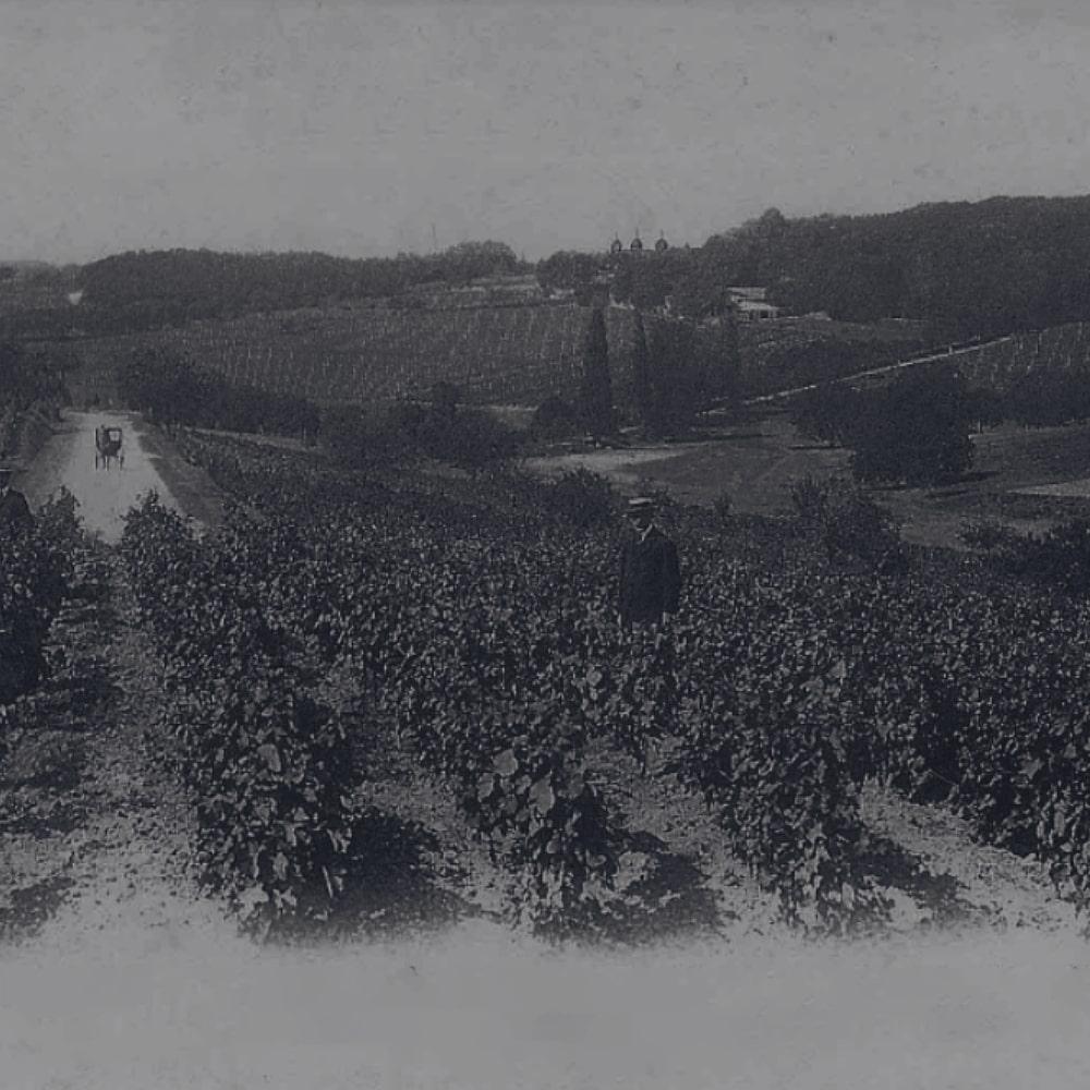 Vines of Croizet Black & White image
